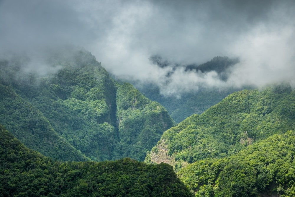La Palma wandern: Lorbeerwald