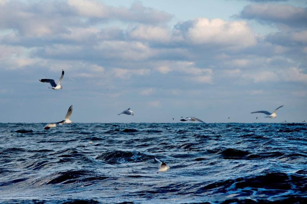 Blick auf Nordsee mit Möven