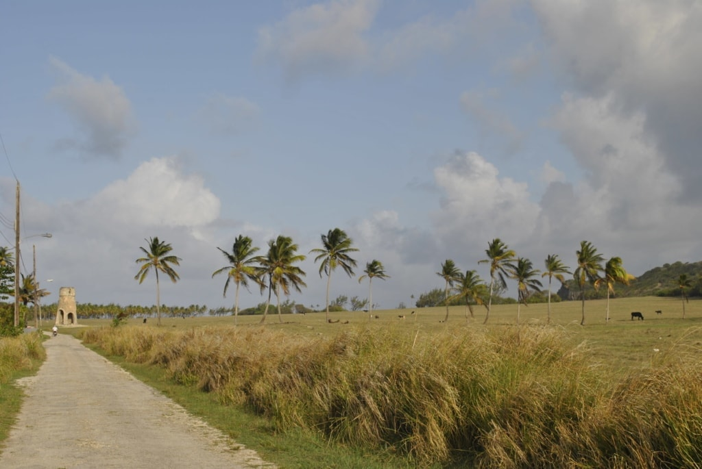 Ehemalige Zuckerrohrplantage auf Barbados