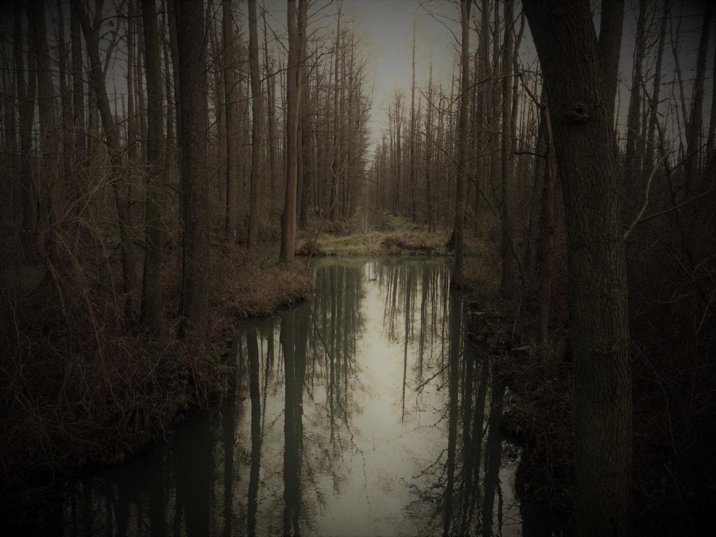 Fließ im Winter im Spreewald