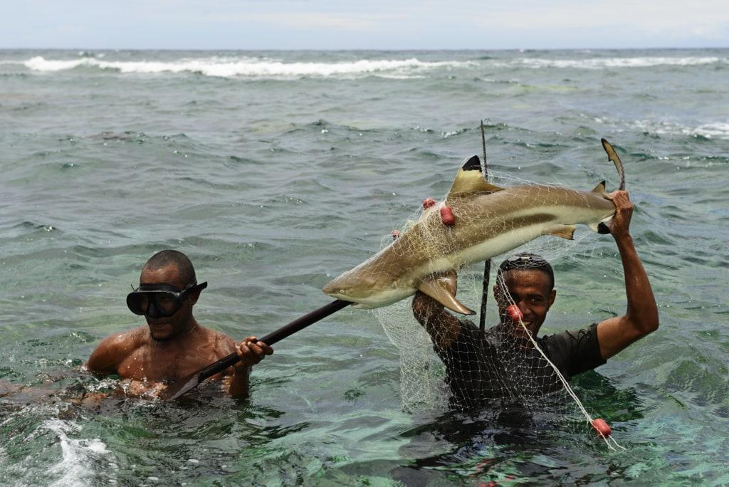 Korafe-Fischer haben einen Schwarzspitzen-Riffhai gespeert, Yavi Village, Tufi, Papua-Neuguinea, Ozeanien