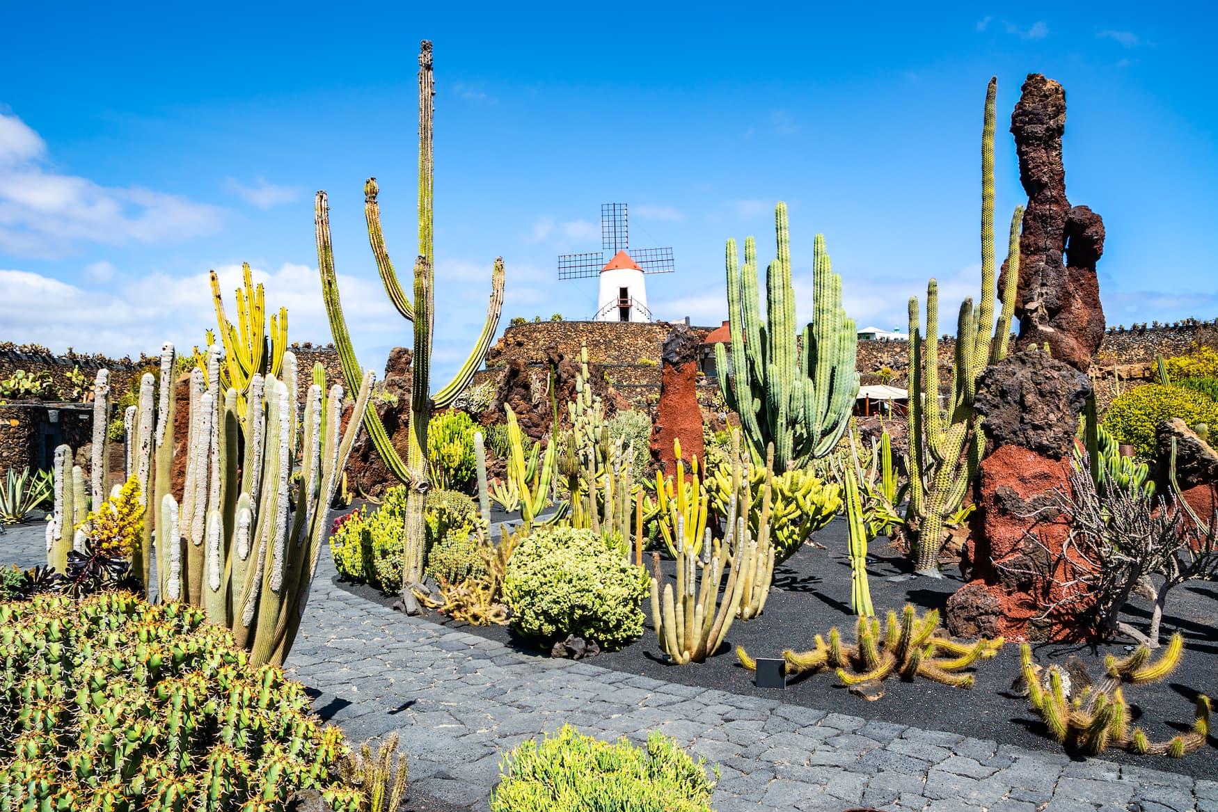 Kaktus, Garten, Insel, Lanzarote