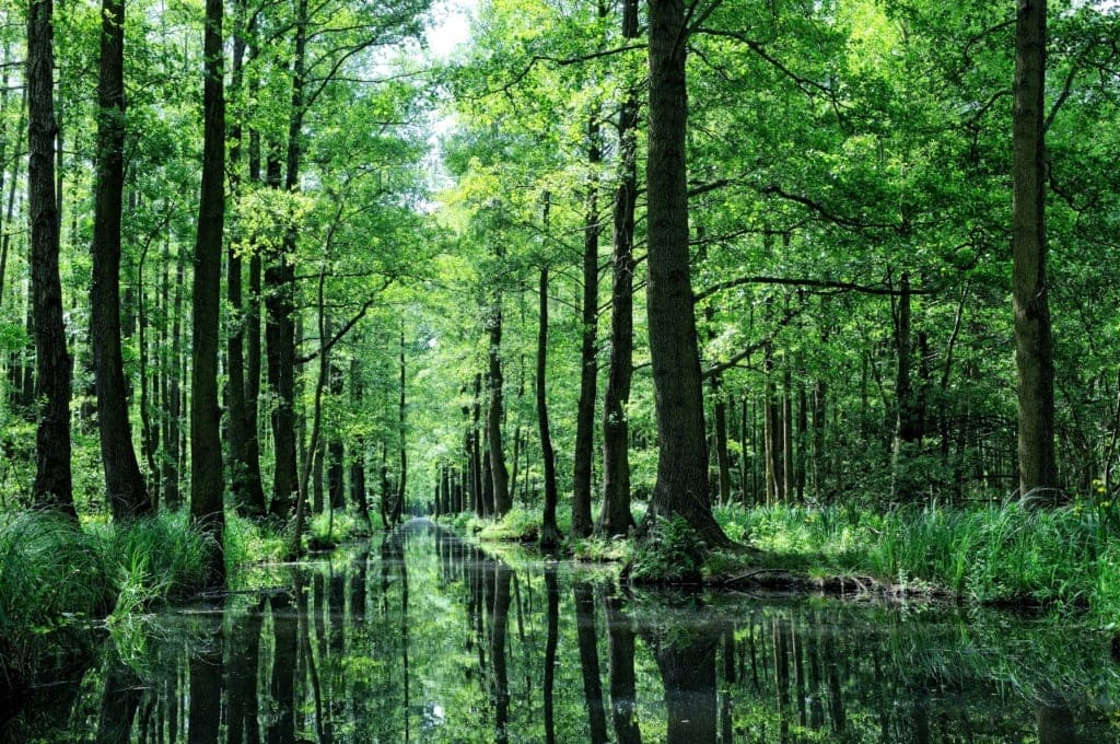 Fließ im Spreewald