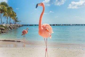 Werbung Mallorca Hotel Gewinnen