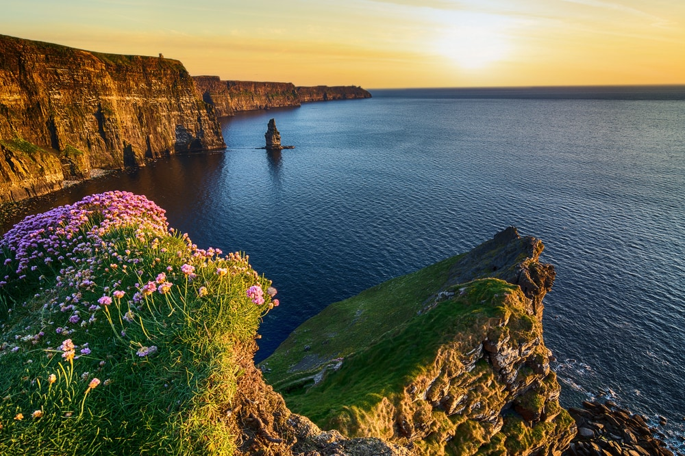 Blumen am Cliffs of Moher in Irland