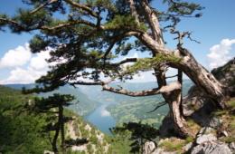 Drina Nationalpark in Serbien