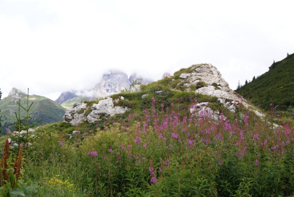 Mit dem Porsche durch Südtirol: Vorbei an Blumen, Pflanzen und Bergen