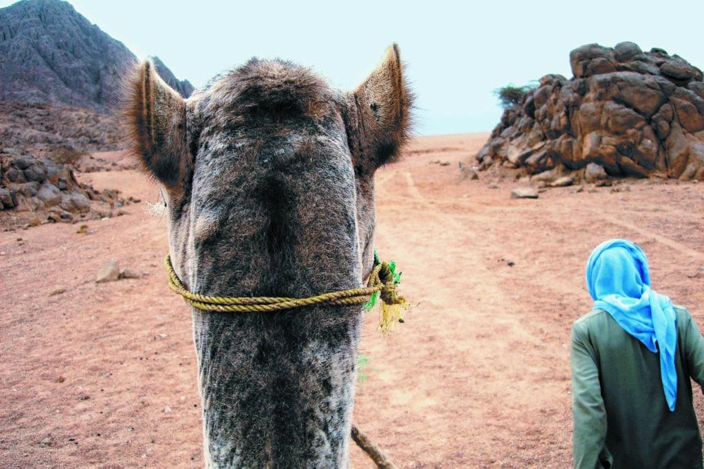 Ritt auf dem Kamel