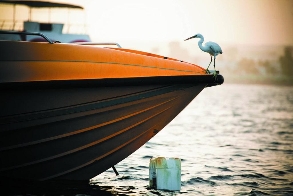 Vogel auf einem Boot