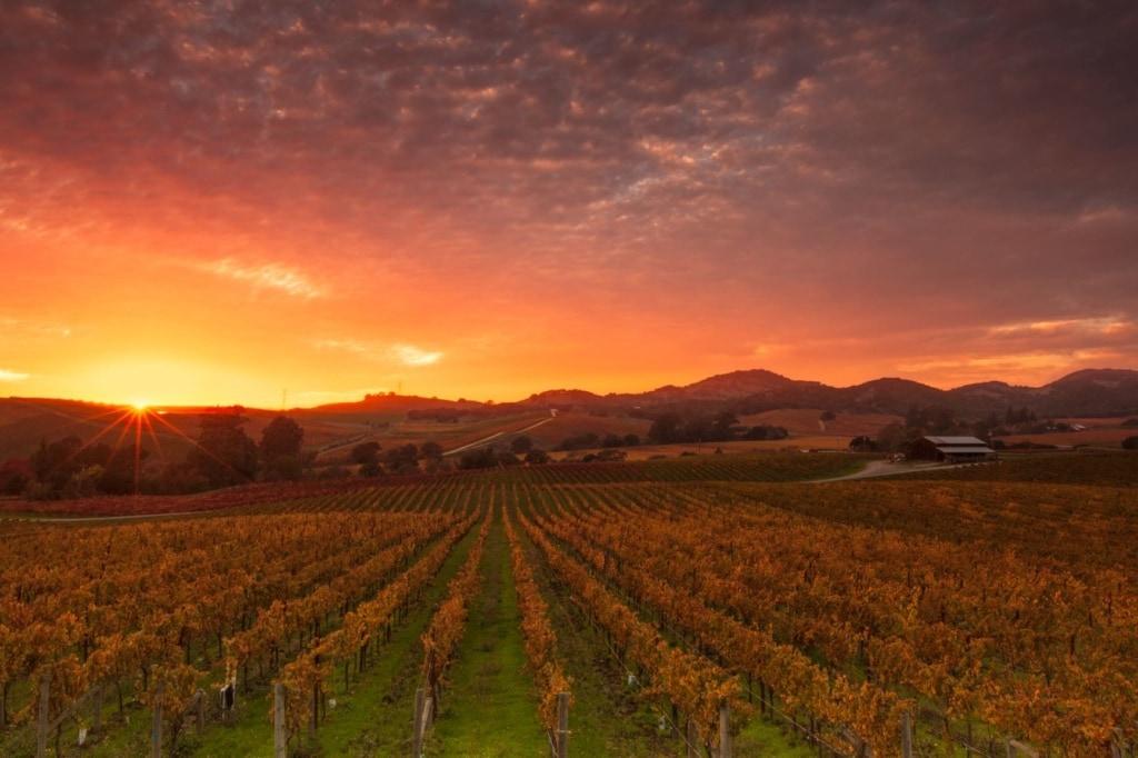 Napa Valley in Kalifornien