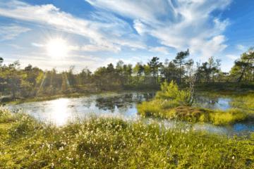 Schwarzes Moor in Hessen
