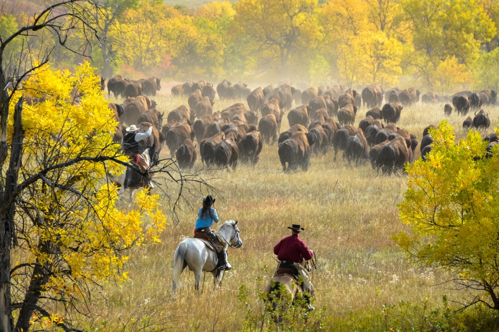 Unterwegs in South Dakota: Besuch beim Buffalo Roundup