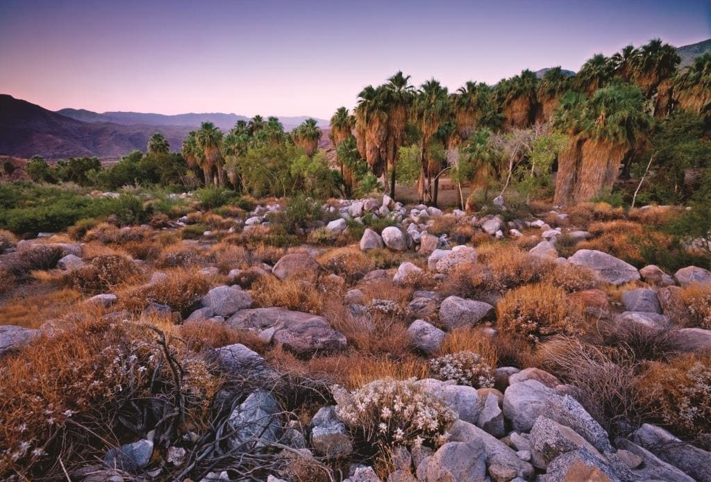Indian Canyons in Palm Springs