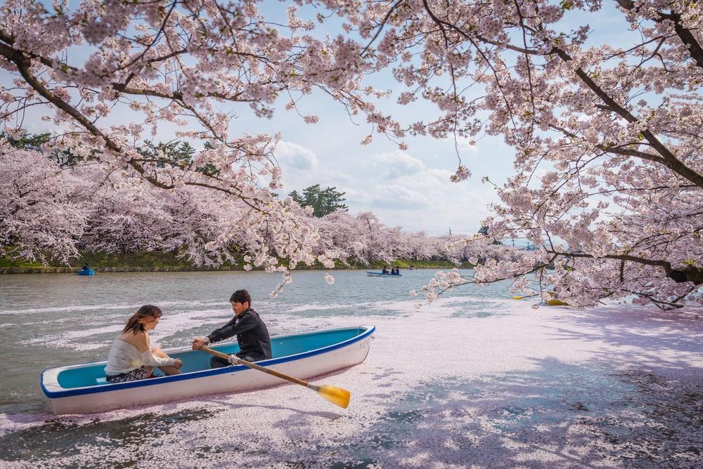 Kirschblüte in Japan: Paar im Boot auf dem Fluss
