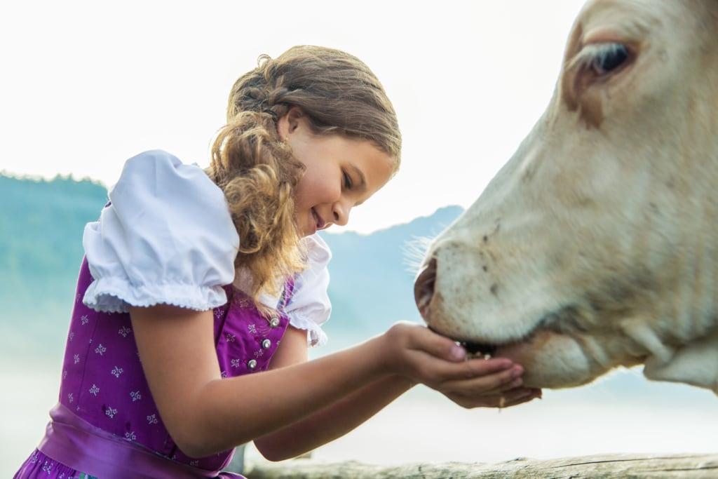 Mädchen, das eine Kuh füttert