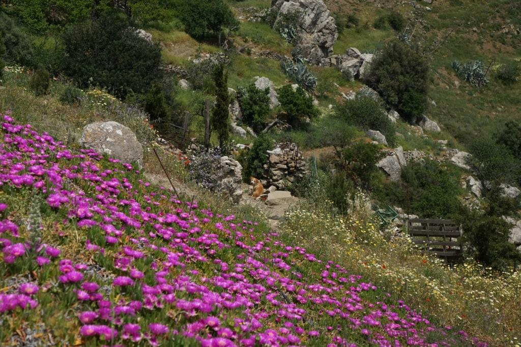 Wanderweg auf Kreta