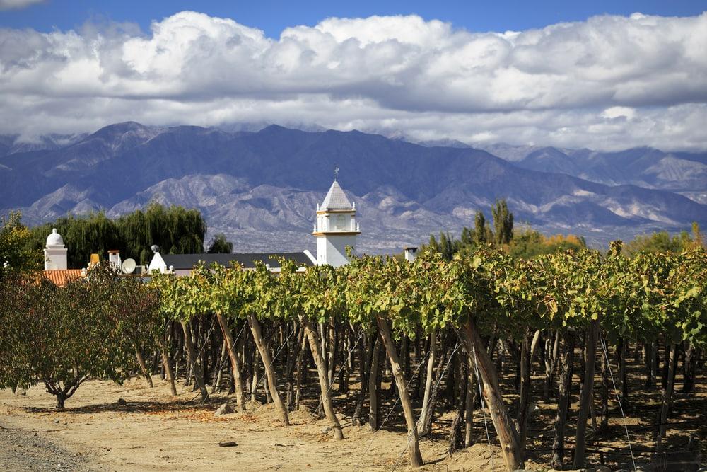 Weinanbaugebiet in Salta