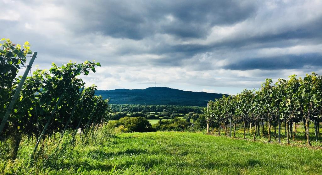 Weinanbaugebiet Kaiserstuhl