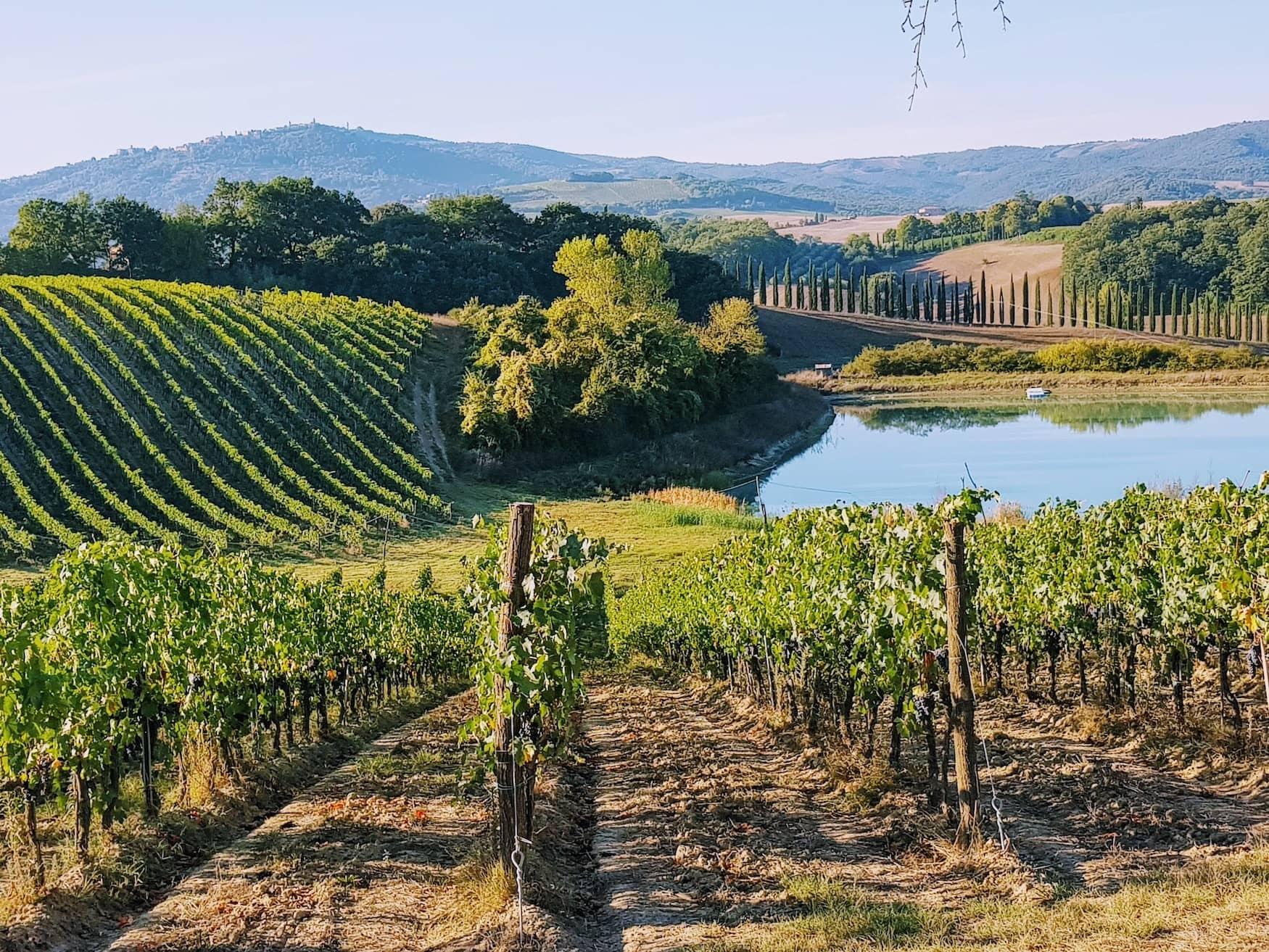 Weinfelder in der Toskana, wo Winzerin Bettina Schumann inspiriert wurde