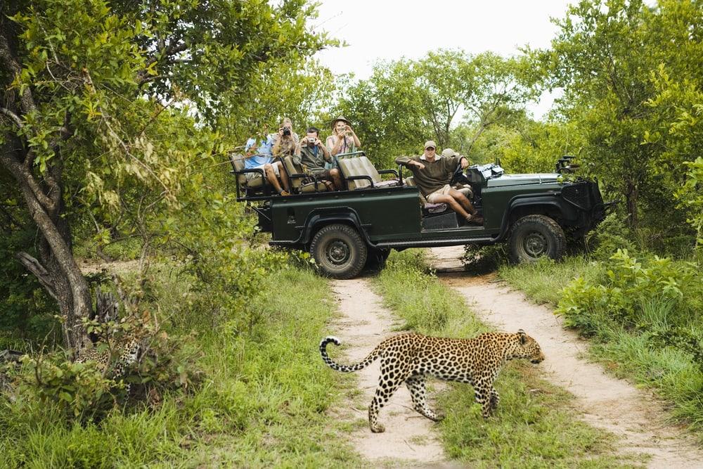 Leopard vor Safarigruppe in Südafrika