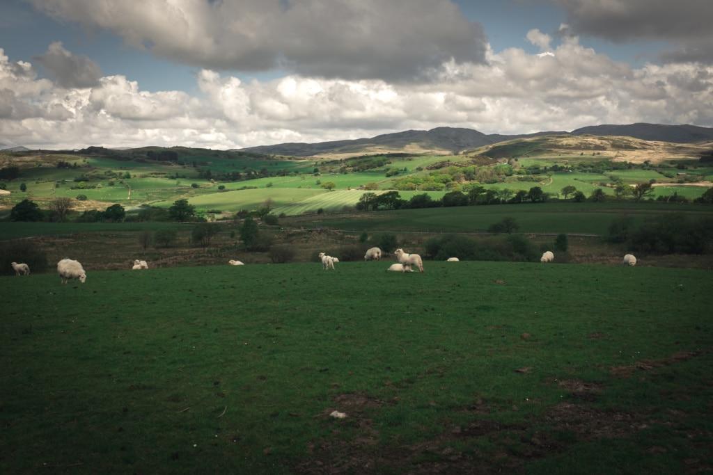 Trawsfynydd