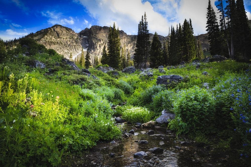 Wandern in Utah: Blick auf die Natur im Cottonwood Canyon