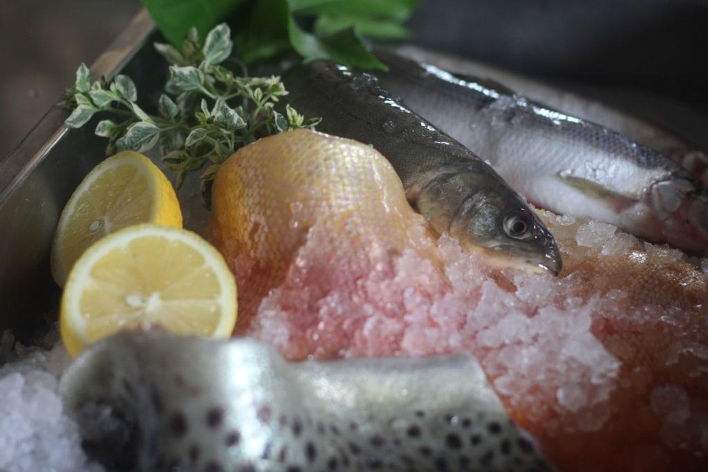 Fisch in Eis