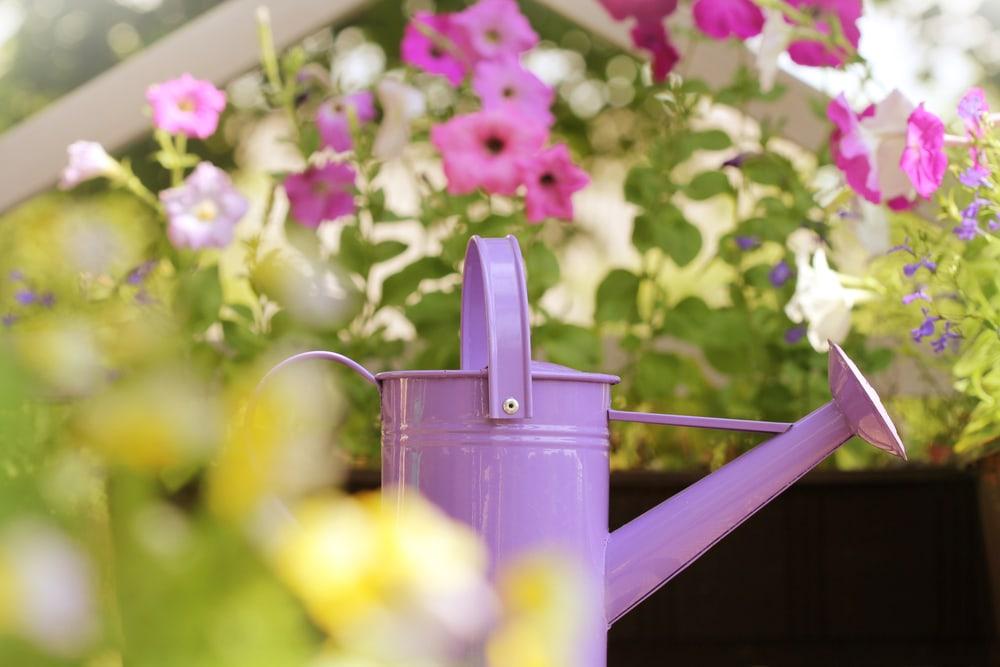 Gießkanne auf Balkon, im Hintergrund Blumen