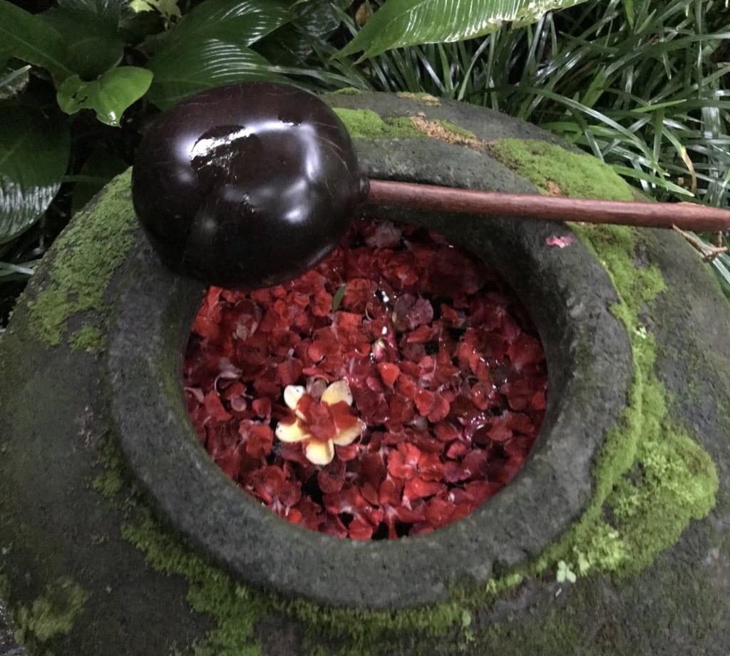 Wassertrog mit roten Blütenblättern