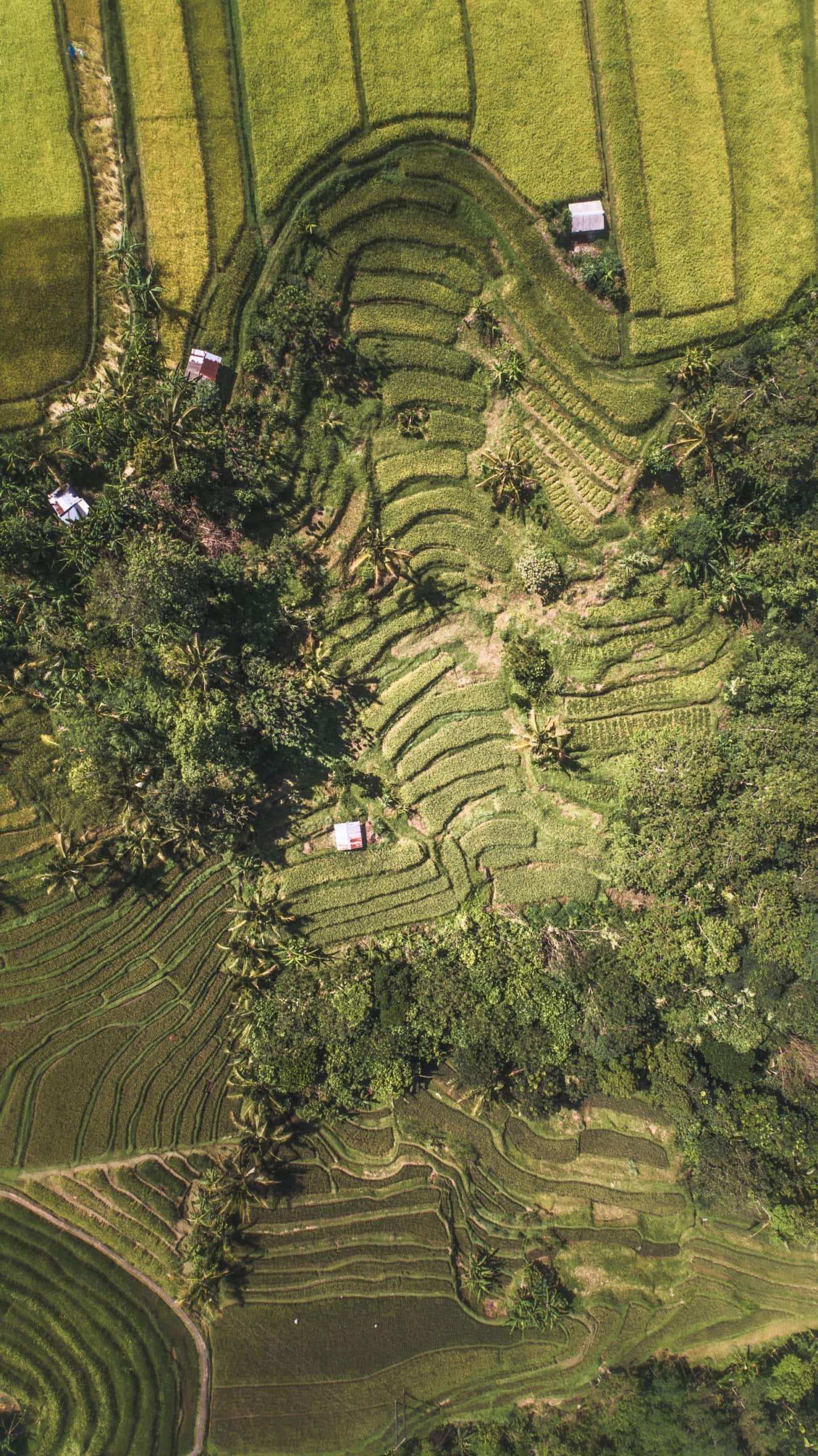 Grüne Reisfelder aus der Vogelperspektive auf Bali