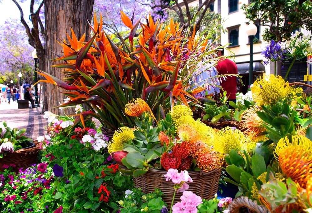 Blumenfestival auf Madeira