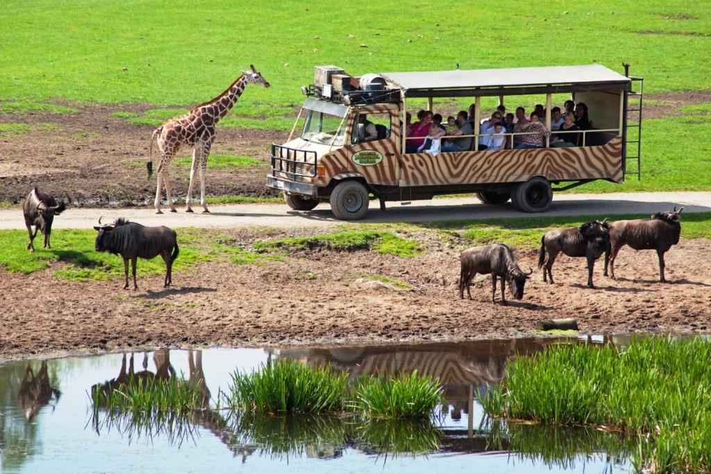 Auf Safari im Serengeti Park