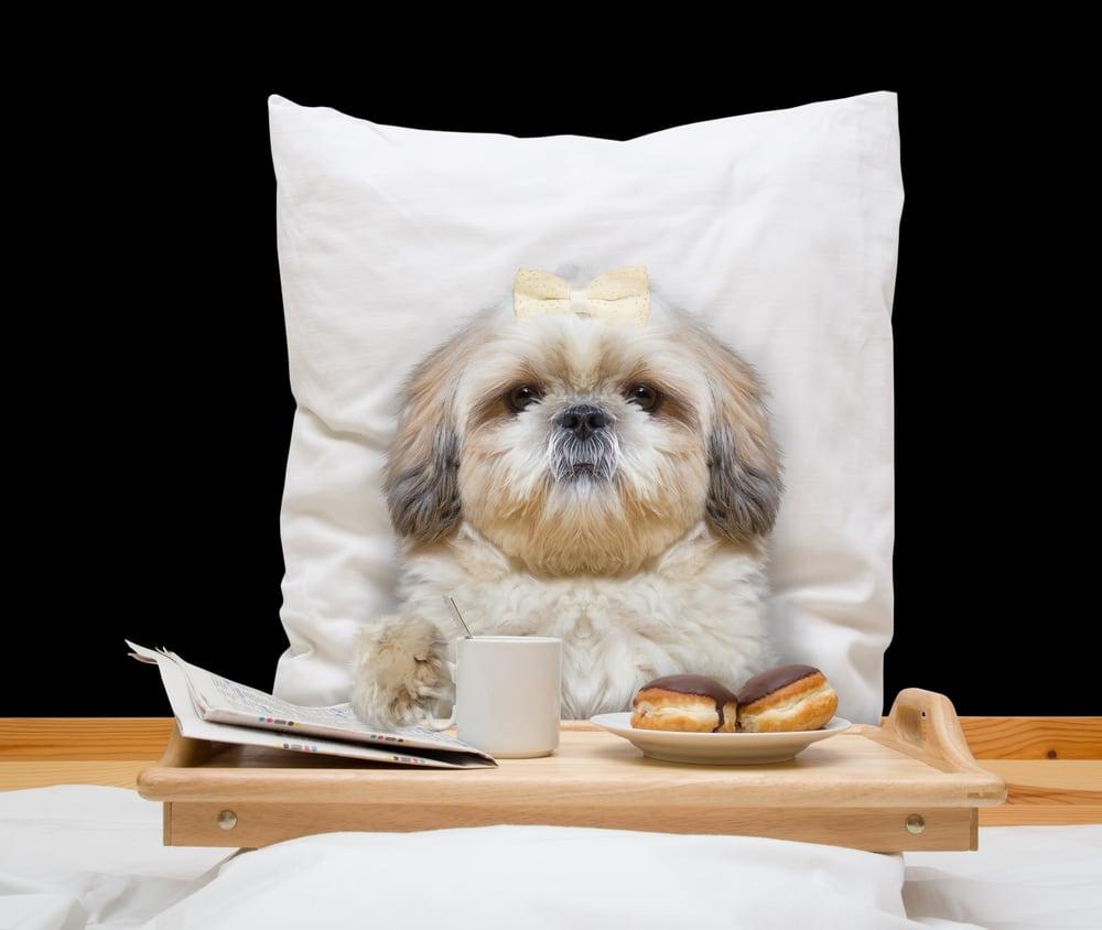 Hund im Bett mit Frühstück