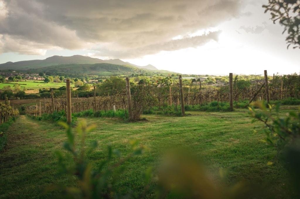 Weingut Pant Du Vinyard in Wales