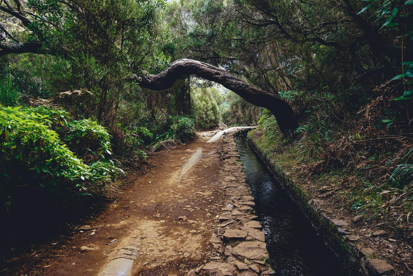 Wanderung entlang der Levadas auf Madeira
