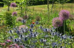 Irland,Garten,Blakes Garden