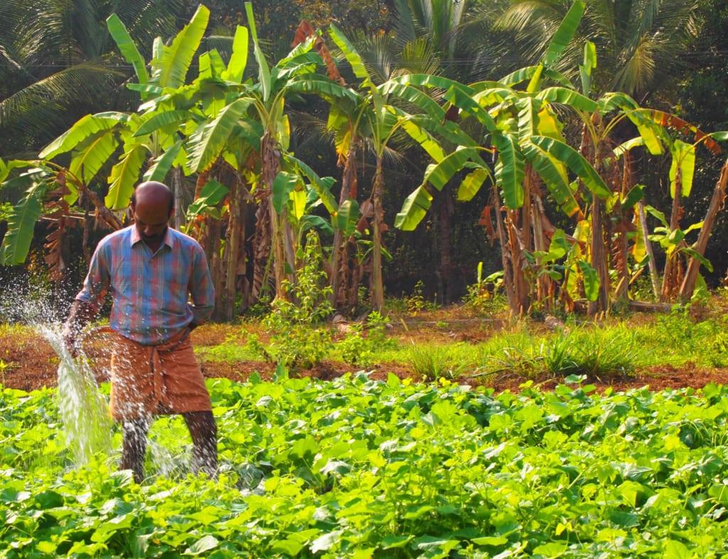 Farm in Kerala, wo der Pfeffer wächst - Indien