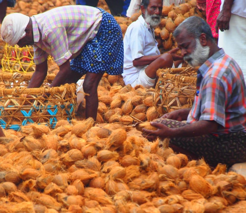 Kokosnuss-Verkäufer in Kerala