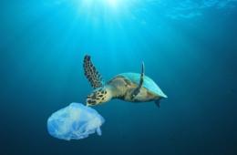 Plastikmüll: Meeresschildkröte schnappt nach Plastiktüte