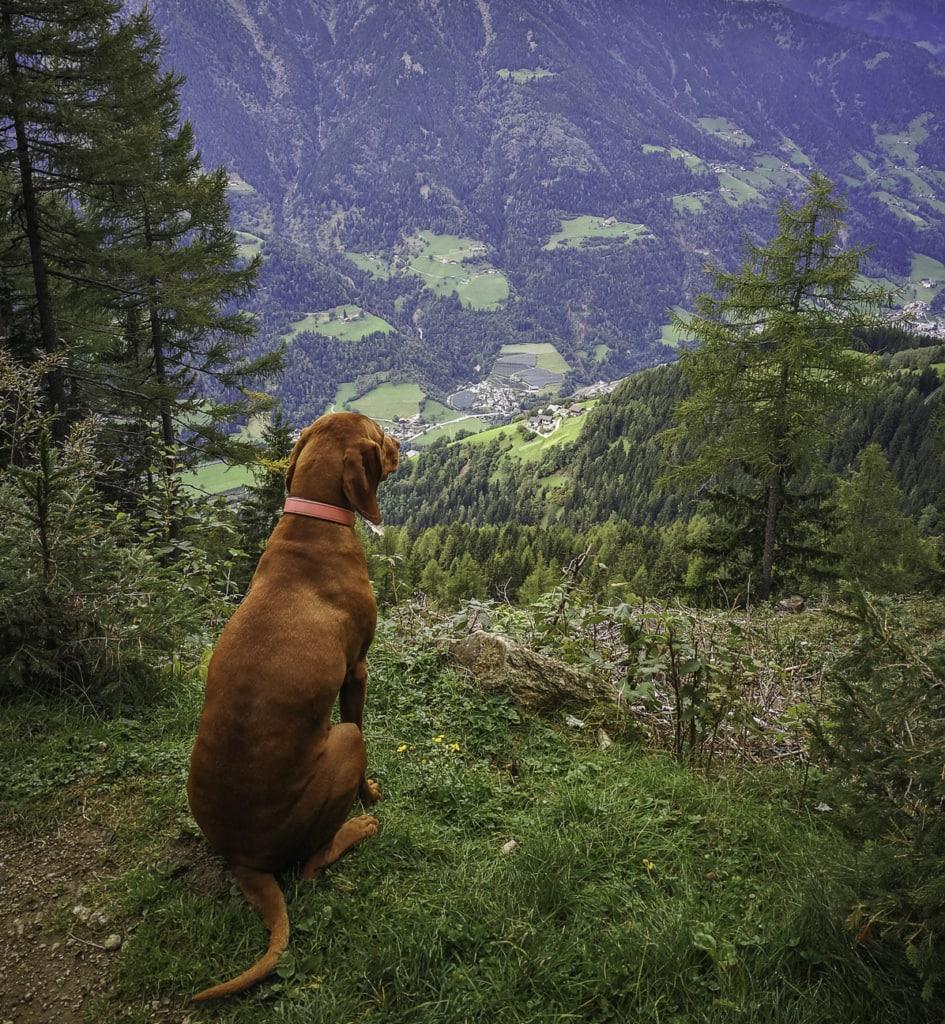 Die Gompm Alm, engagiert betrieben von Inhaber Helmuth Gufler, liegt im Hirzer-Wanderparadies auf 1.800 m.