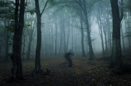Schatten huscht durch düsteren und gruseligen Wald