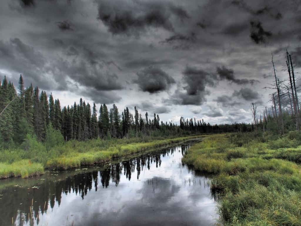 Der Riding Mountain Nationalpark ist mit dichtem Wald bedeckt.
