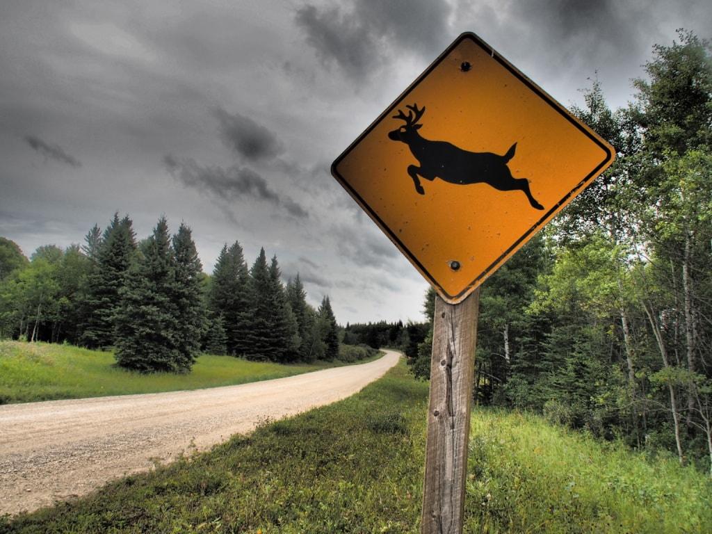 Im Riding Mountain Nationalpark in Manitoba fühlen sich Elche, Bären und Wölfe wohl.