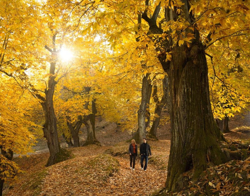 Wandern im Herbst: Paar im Wald im Trentino in Italien