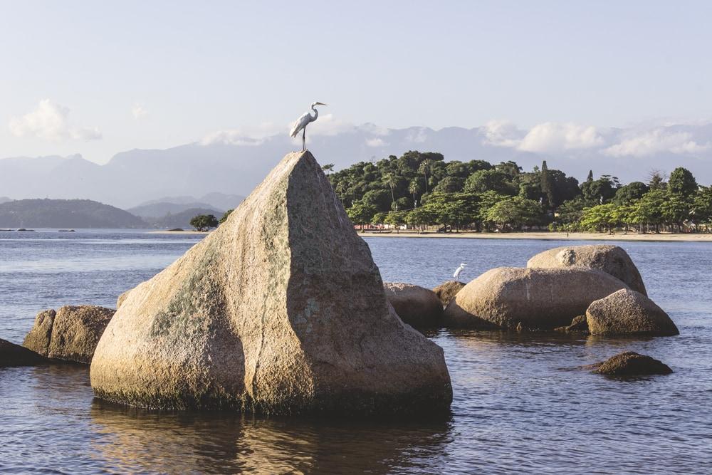 Fischreiher auf Fels im Wasser in tropischer Kulisse.