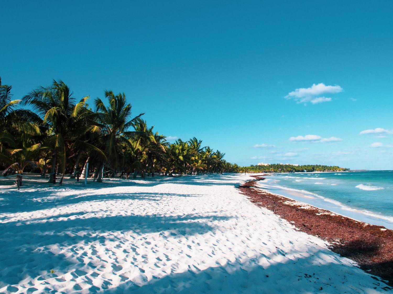 Strand mit Algen an der Riviera Maya in Mexiko