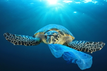 Schildkröte im Ozean, die Plastik für Nahrung hält