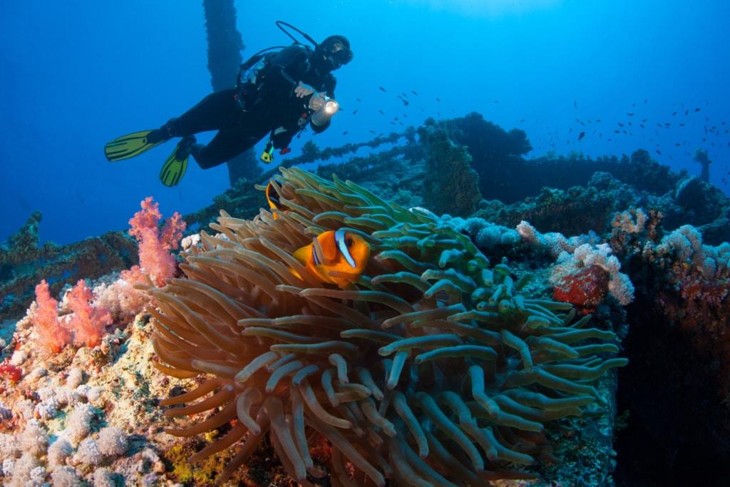 Vor Australiens Ostküste sank die Yolanga – heute haben sich viele Tiere das Schiffswrack zum Lebensraum gemacht.