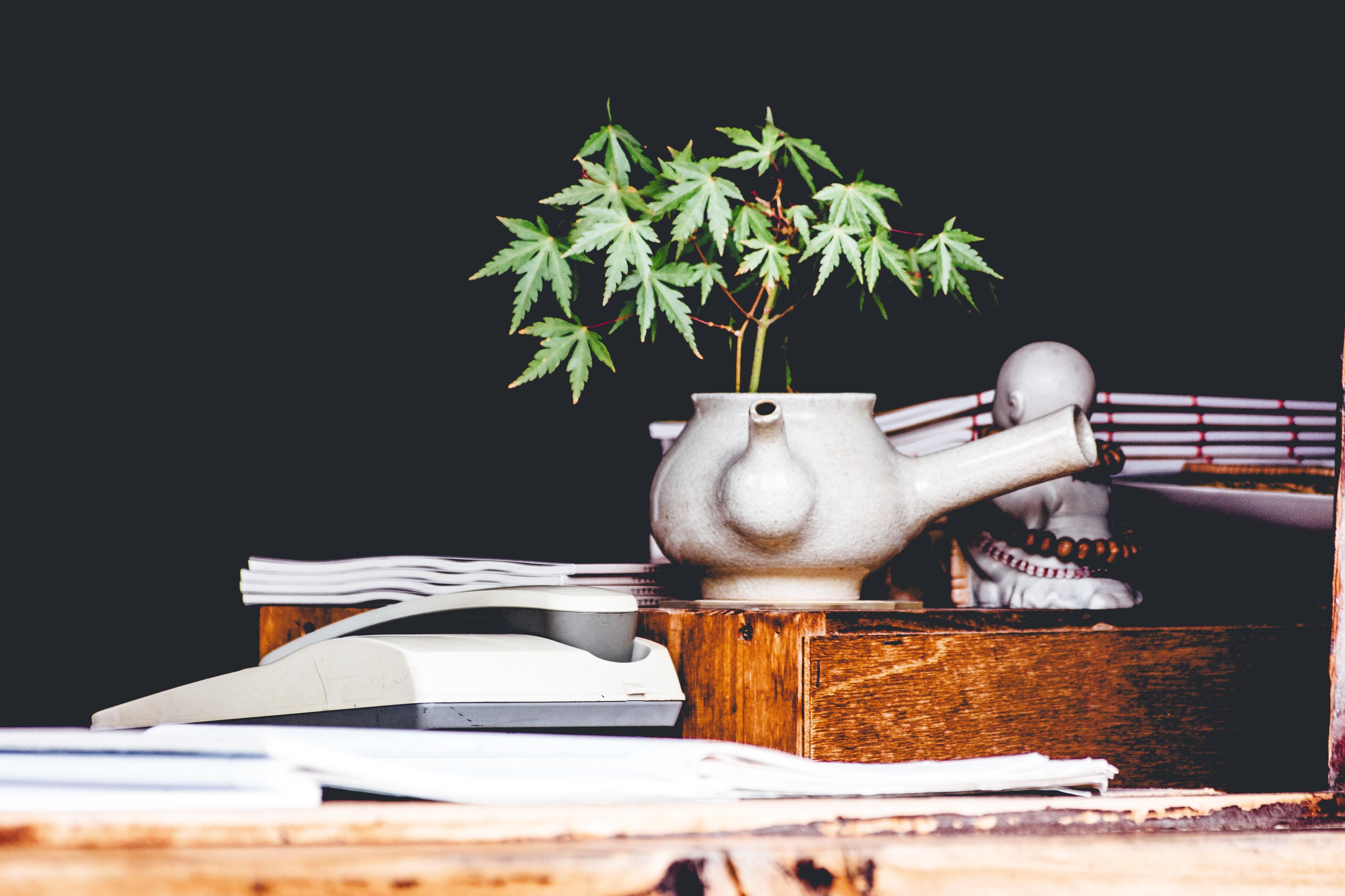 Marijuanapflanze in Kanne mit Buddha