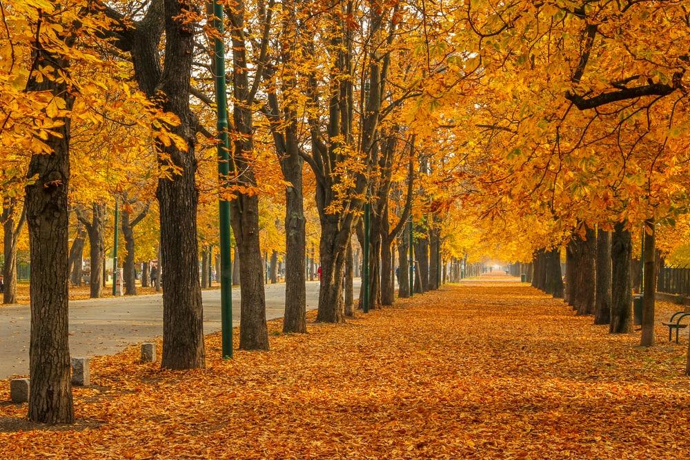 Allee im Herbst mit goldenem Laub